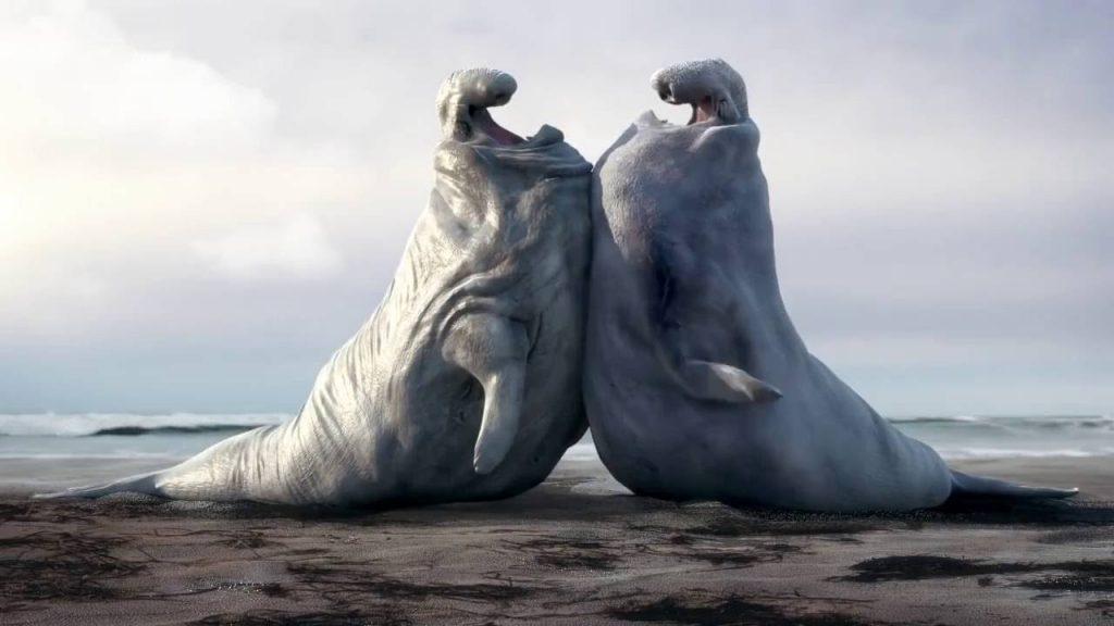 Морские слоны фотографии (лат. Mirounga) - самые красивые картинки 12