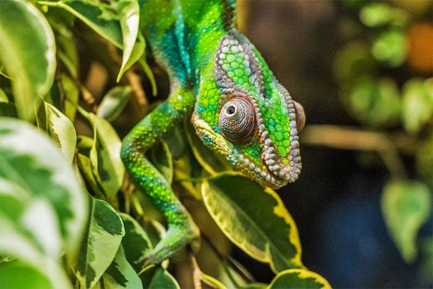 Необычные домашние животные - самые интересные и удивительные 1