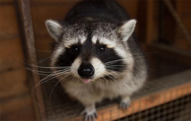 Необычные домашние животные - самые интересные и удивительные 4