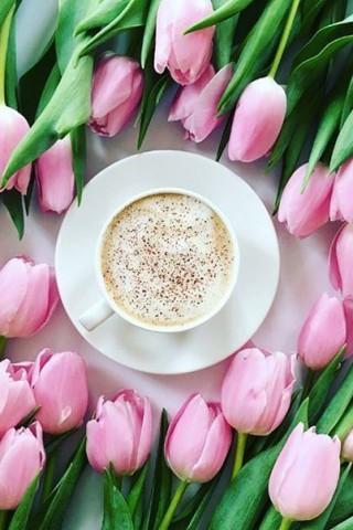 Обои весна тюльпаны на рабочий стол  картинки с раздела