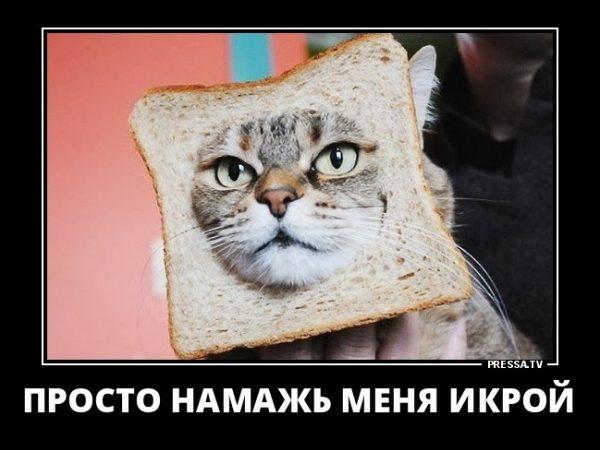 Ржачные и прикольные демотиваторы за конец февраля - лучшие №20 5