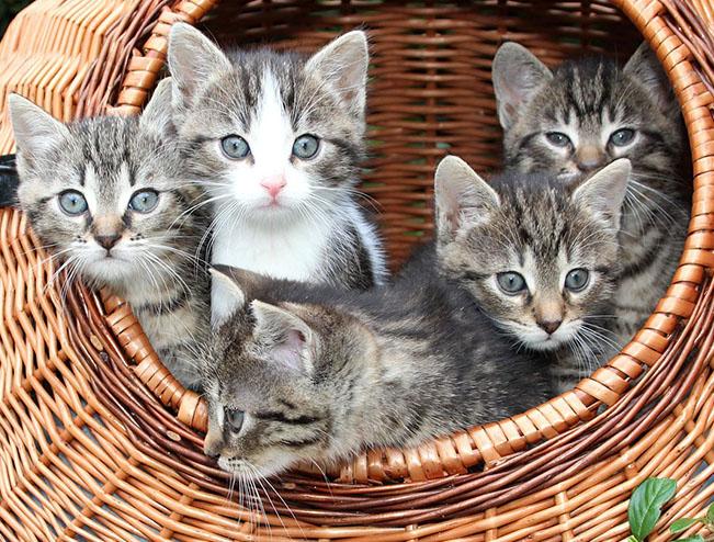 Самые милые и прикольные картинки котят и щенят - лучшая подборка 14