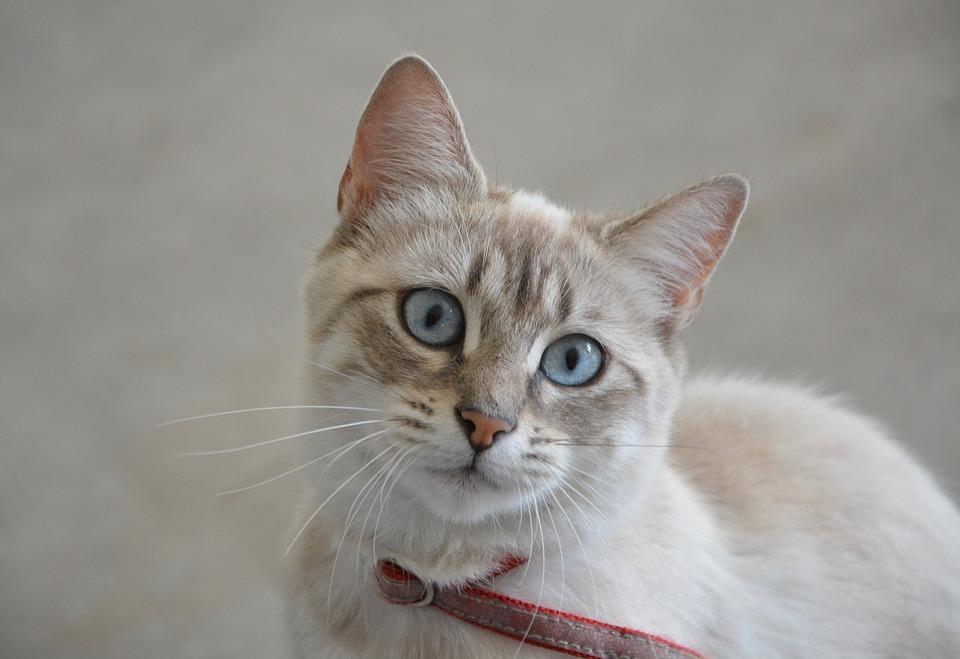 Самые милые и прикольные картинки котят и щенят - лучшая подборка 15