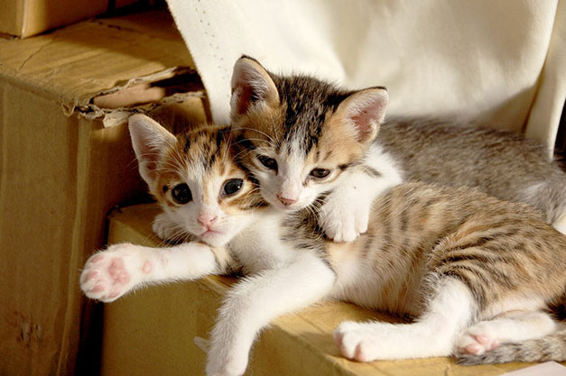 Самые милые и прикольные картинки котят и щенят - лучшая подборка 25