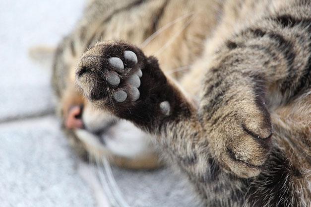 Самые милые и прикольные картинки котят и щенят - лучшая подборка 5