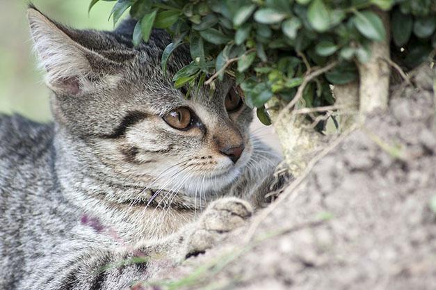 Самые милые и прикольные картинки котят и щенят - лучшая подборка 8
