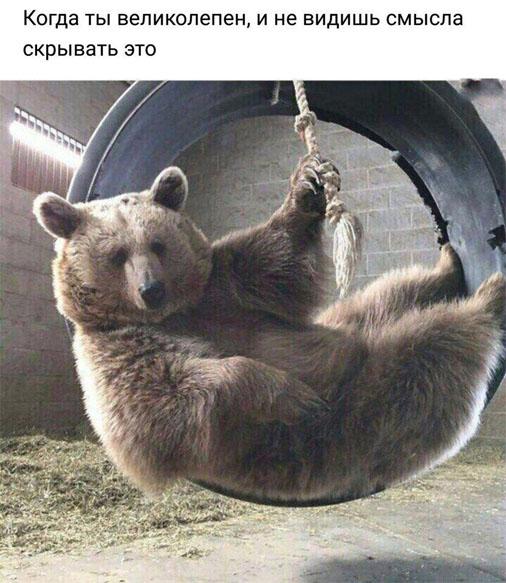 Самые смешные картинки и фото животных до слез за февраль 2018 №34 1