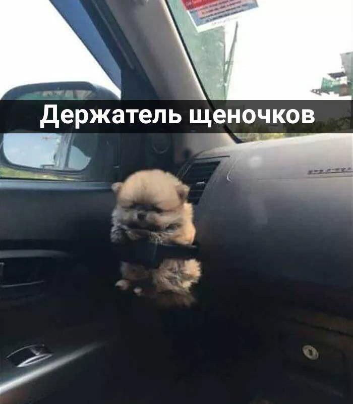 Самые смешные картинки и фото животных до слез за февраль 2018 №34 13
