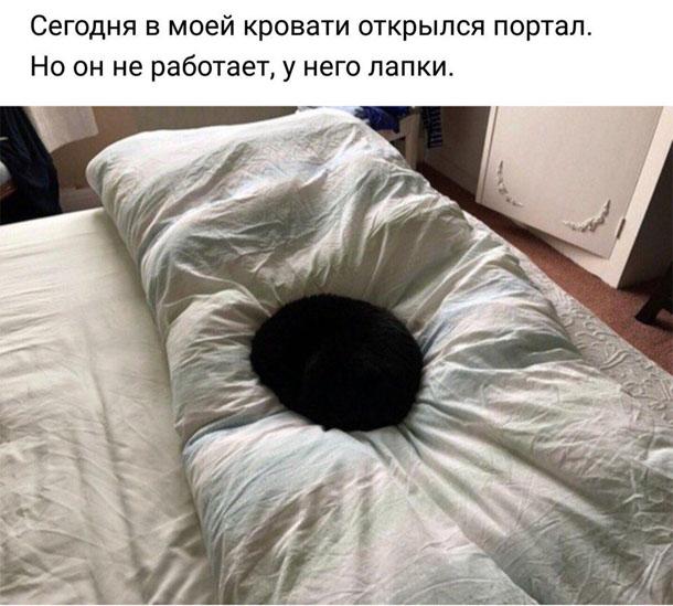 Самые смешные картинки и фото животных до слез за февраль 2018 №34 6