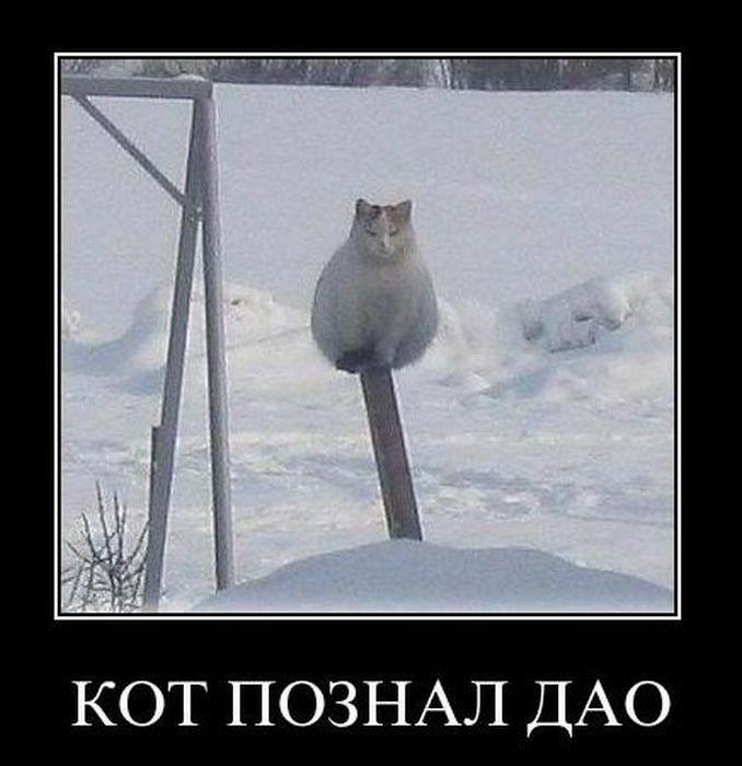 Смешные и угарные демотиваторы до слез за февраль 2018 - подборка №19 6