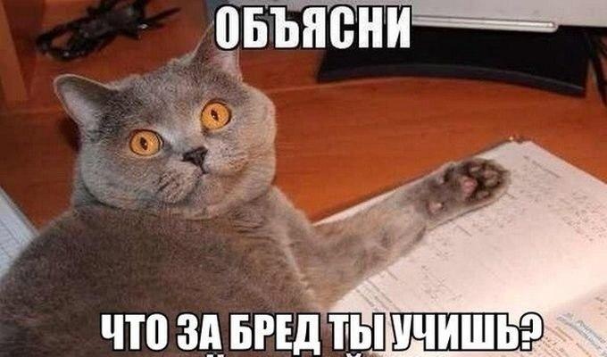 Смешные коты и кошки - самые прикольные и веселые картинки, фото №39 10