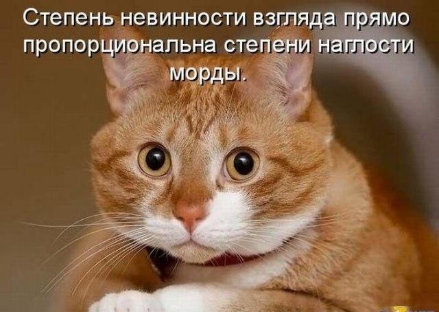 Смешные коты и кошки - самые прикольные и веселые картинки, фото №39 11