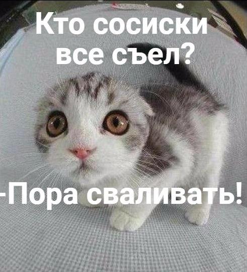 Смешные коты и кошки - самые прикольные и веселые картинки, фото №39 13
