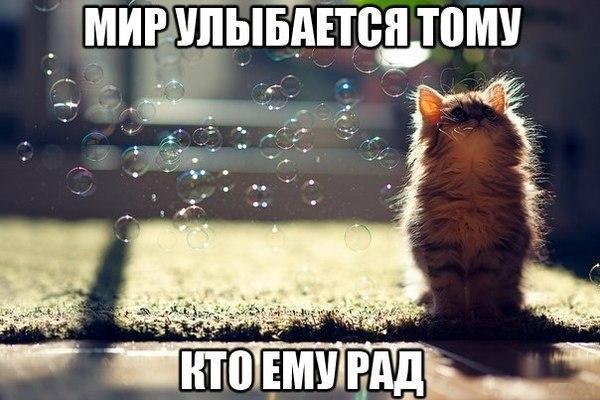 Смешные коты и кошки - самые прикольные и веселые картинки, фото №39 15