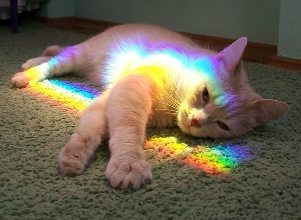 Смешные коты и кошки - самые прикольные и веселые картинки, фото №39 17
