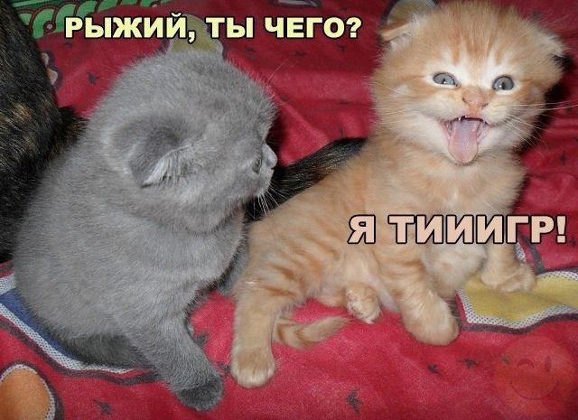 Смешные коты и кошки - самые прикольные и веселые картинки, фото №39 19