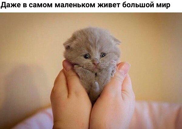 Смешные коты и кошки - самые прикольные и веселые картинки, фото №39 2