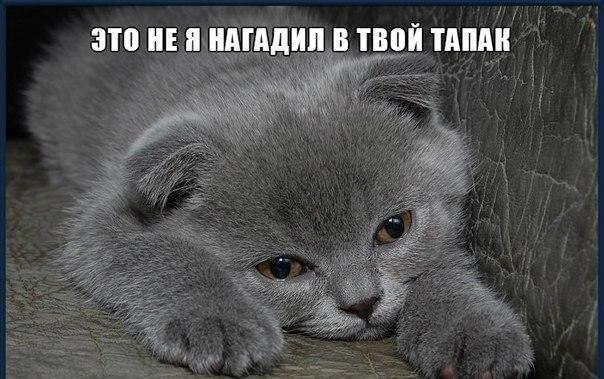 Смешные коты и кошки - самые прикольные и веселые картинки, фото №39 20