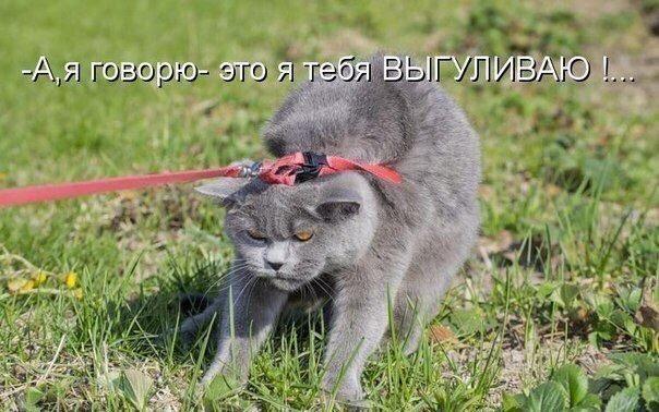 Смешные коты и кошки - самые прикольные и веселые картинки, фото №39 23