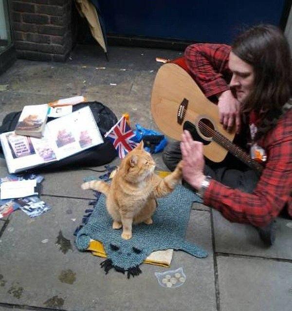 Смешные коты и кошки - самые прикольные и веселые картинки, фото №39 25