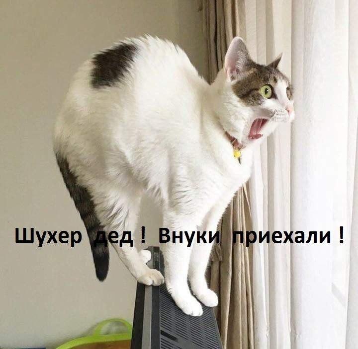 Смешные коты и кошки - самые прикольные и веселые картинки, фото №39 27