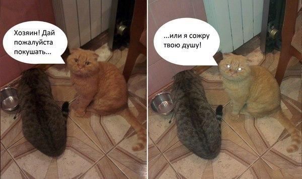 Смешные коты и кошки - самые прикольные и веселые картинки, фото №39 29