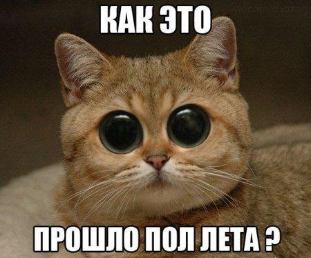 Смешные коты и кошки - самые прикольные и веселые картинки, фото №39 31