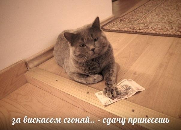 Смешные коты и кошки - самые прикольные и веселые картинки, фото №39 34