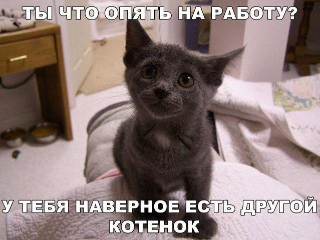 Смешные коты и кошки - самые прикольные и веселые картинки, фото №39 40