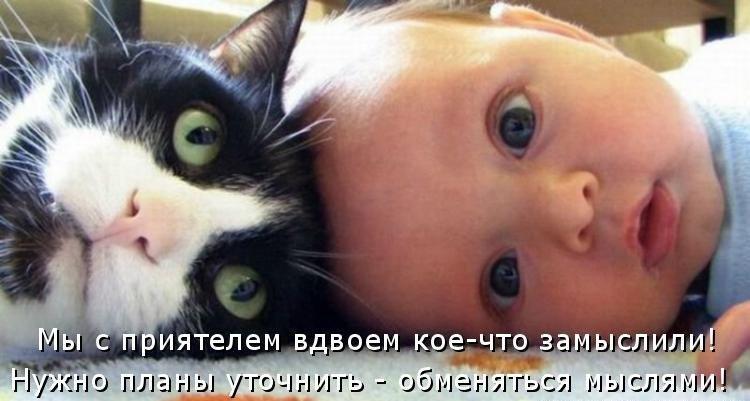 Смешные коты и кошки - самые прикольные и веселые картинки, фото №39 42