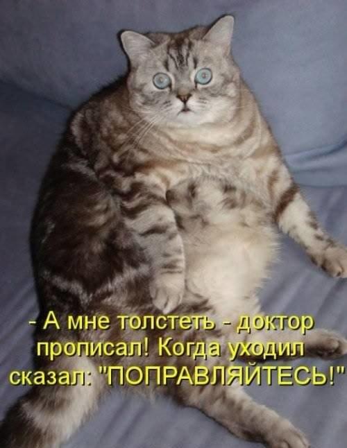 Смешные коты и кошки - самые прикольные и веселые картинки, фото №39 8