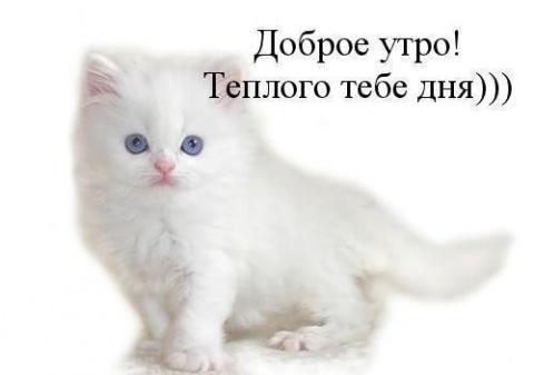 """""""Доброе утро котик"""" - самые красивые и приятные открытки, картинки 9"""
