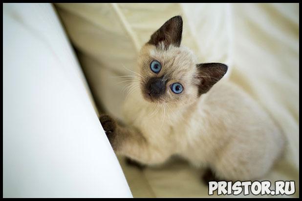В каком возрасте лучше всего брать котенка домой - оптимальный возраст 1