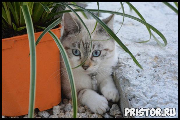 В каком возрасте лучше всего брать котенка домой - оптимальный возраст 2