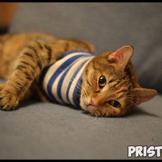 Глисты у котят - симптомы и лечение, основные признаки, причины 1