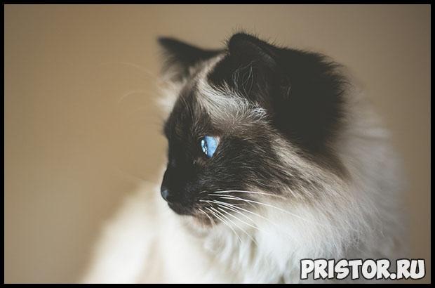Глисты у котят - симптомы и лечение, основные признаки, причины 2