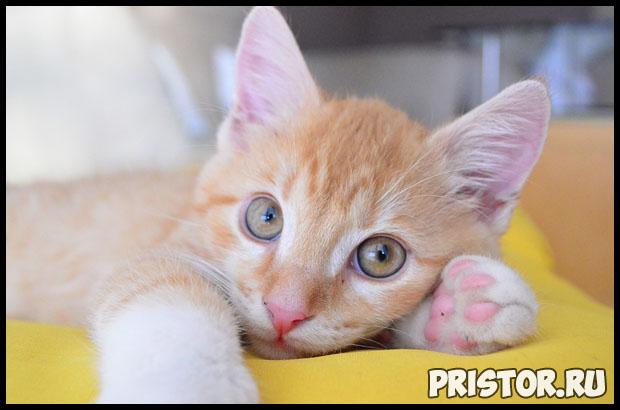 Глисты у котят - симптомы и лечение, основные признаки, причины 3