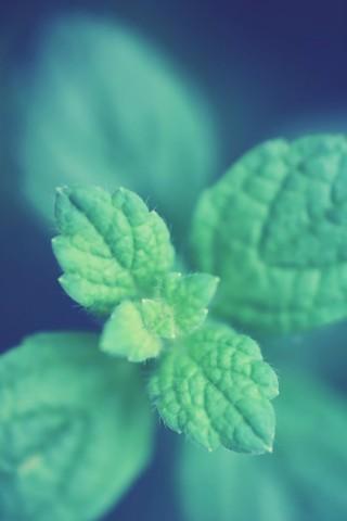 Живые картинки зеленого мира на телефон - самые красивые №1 11