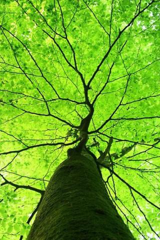 Живые картинки зеленого мира на телефон - самые красивые №1 13
