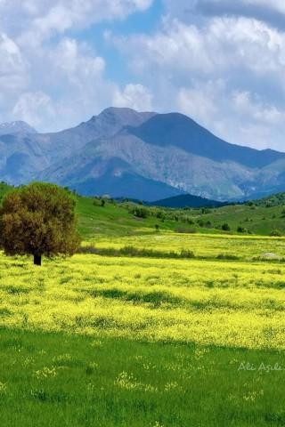 Живые картинки зеленого мира на телефон - самые красивые №1 2
