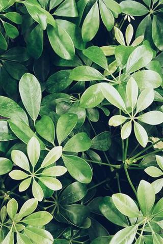 Живые картинки зеленого мира на телефон - самые красивые №1 22