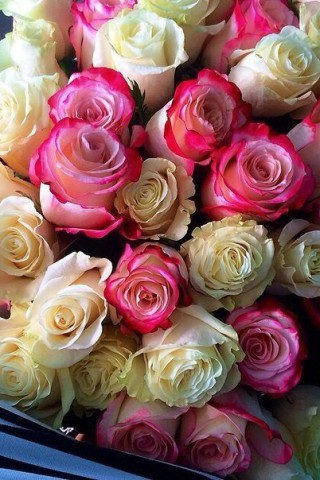 Интересные и красивые цветы картинки на телефон - коллекция №2 17