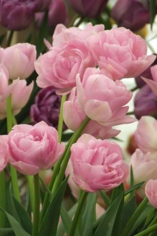 Интересные и красивые цветы картинки на телефон - коллекция №2 4