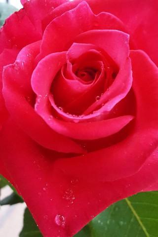 Интересные и красивые цветы картинки на телефон - коллекция №2 6