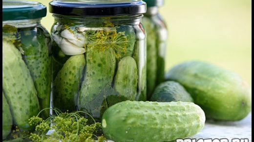 Как вырастить урожай огурцов в открытом грунте - подготовка и уход 1