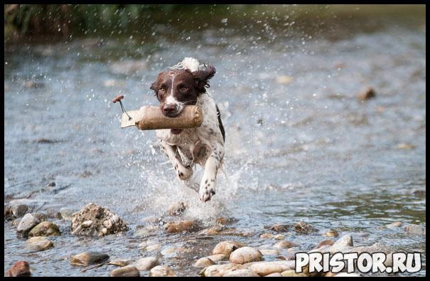 Как правильно мыть собаку - главные рекомендации и советы 1