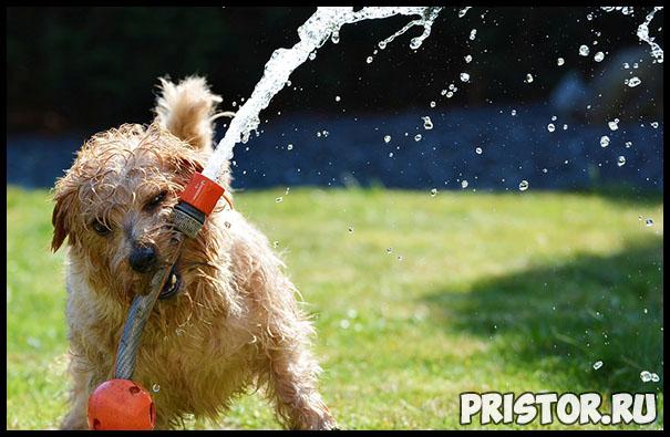 Как правильно мыть собаку - главные рекомендации и советы 3