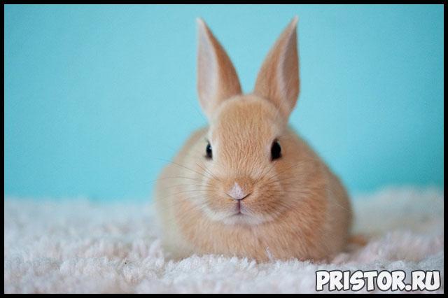 Как ухаживать за кроликом в домашних условиях - основные секреты 2