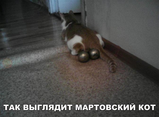 Картинки и фото про животных - смешные и прикольные, подборка №57 1