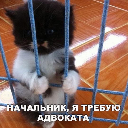 Картинки и фото про животных - смешные и прикольные, подборка №57 3